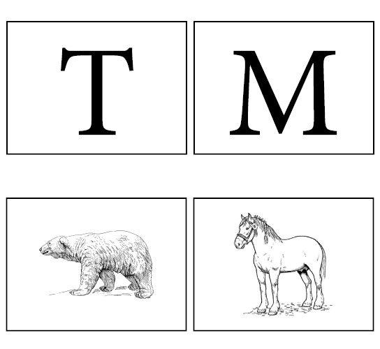 Examples of letter and animal cards